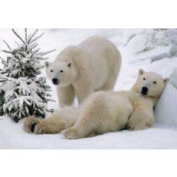 Üdvözlőkártya-Jegesmacik/Amazing Christmas