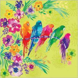 Üdvözlőkártya-Színes papagájok- Abacus/Lemongrass quadrat