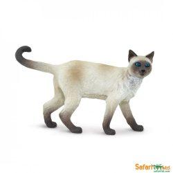 Siamese -Sziámi macska-Safari