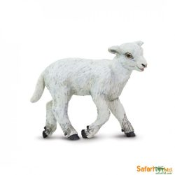 Bárány- Lamb Safari