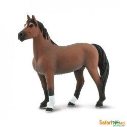 Morgan Stallion ló-Safari