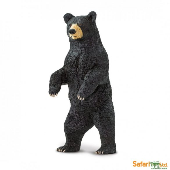 Fekete medve- Black Bear-Safari