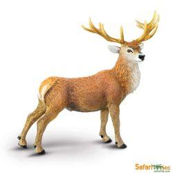 Vörös bak szarvas- Red Deer Buck  Safari