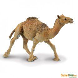 Teve- Dromedary Camel Safari