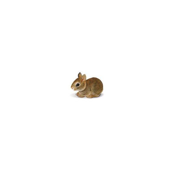Eastern Cottontail Rabbit Baby- bébi nyuszi Safari