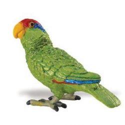 Zöldarcú amazon papagáj- Green-cheeked Amazon Parrot Safari