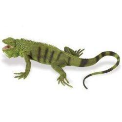 Iguana Safari