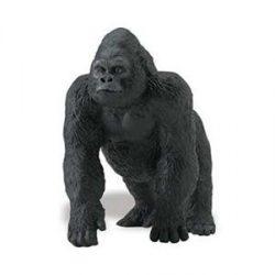 Hím gorilla- Lowland Gorilla Safari