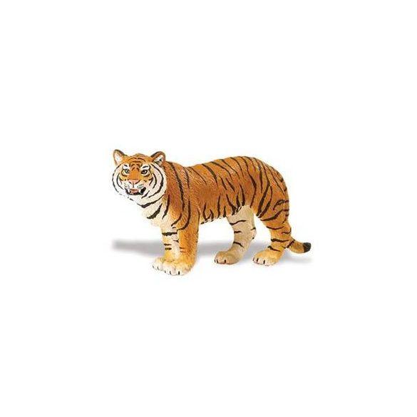 Bengáli tigris- Bengal Tigress-Safari